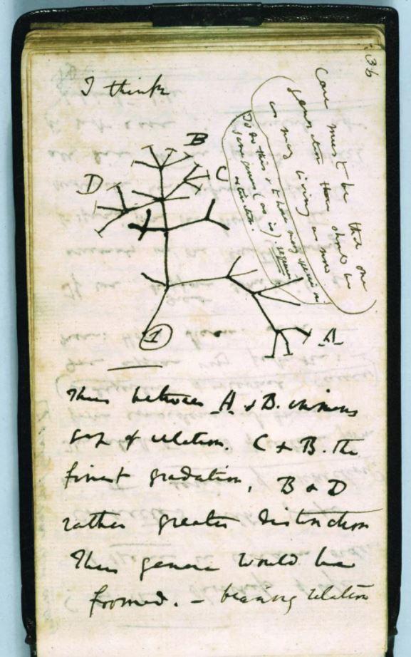 L'arbre de la vie dessiné par Darwin